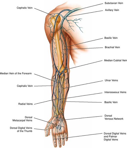 Upper Extremity Vascular Diagram - DIY Enthusiasts Wiring Diagrams •