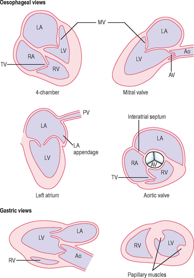 Hypertonia Szakrendelés