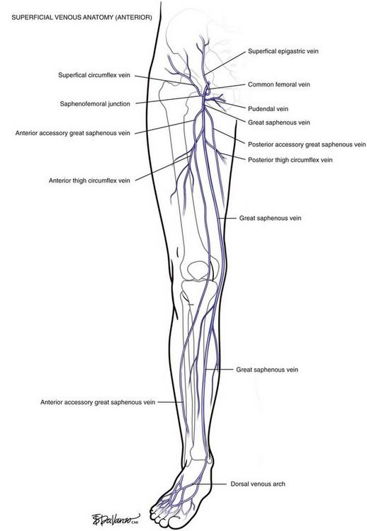 Venous Anatomy | Thoracic Key