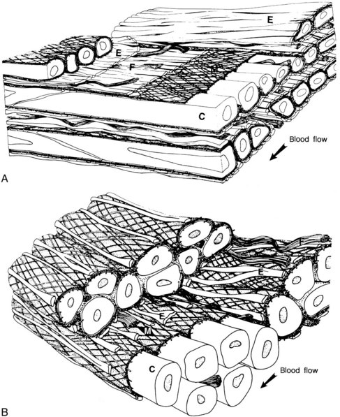 anatomy  physiology  and pharmacology of the vascular wall