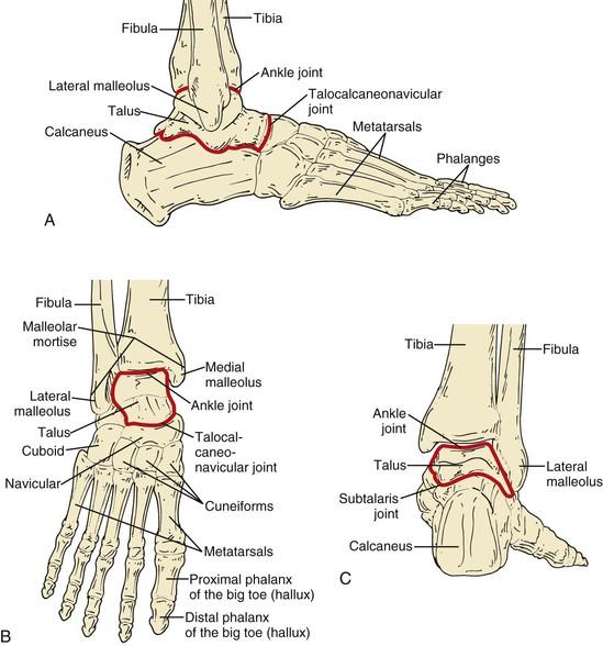 Anatomy of a toe