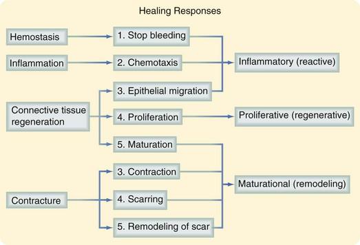 shunt wound motor wiring diagram wound healing diagram #10