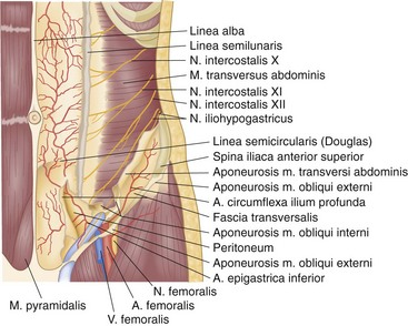 Abdominal wall umbilicus peritoneum mesenteries omentum and figure 45 7 arteries and nerves of the anterolateral abdominal wall ccuart Images