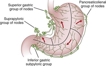 Image result for stomach lymphatic drainage