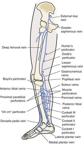 gastrocnemius artery - photo #13