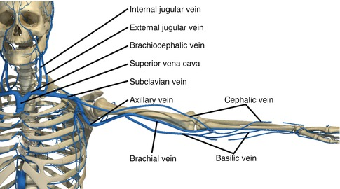 subclavian artery and vein injuries | thoracic key, Human Body