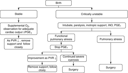 Ebstein's Anomaly in the Neonate | Thoracic Key