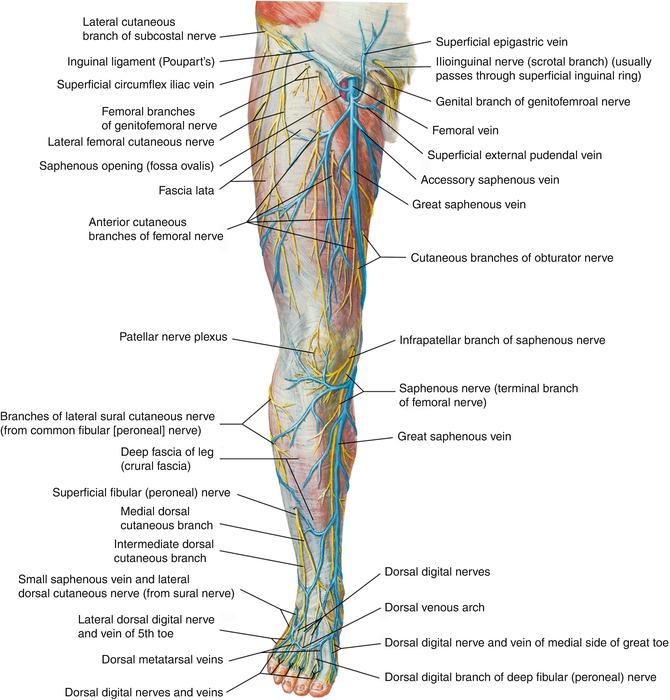 Anatomy Thoracic Key