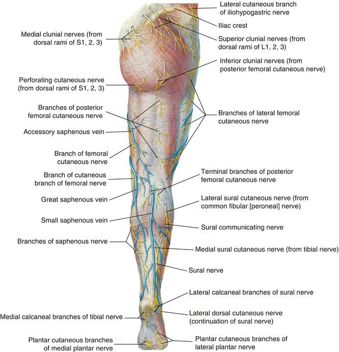 anatomy | thoracic key, Human Body